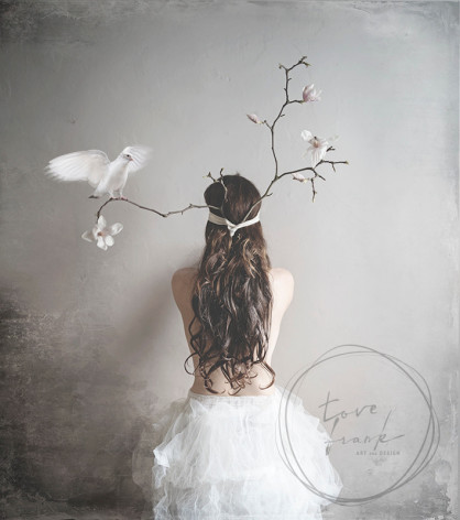 Kort, Magnolia