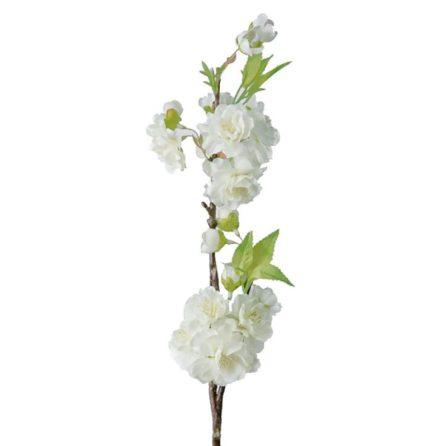 Körsbärsblom, Vit