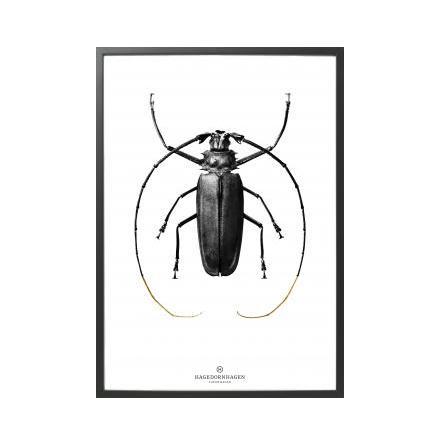 Poster, BW2 70x100 cm