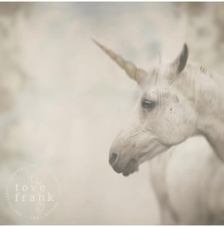 Kort, Unicorn 15x15 cm, Tove Frank