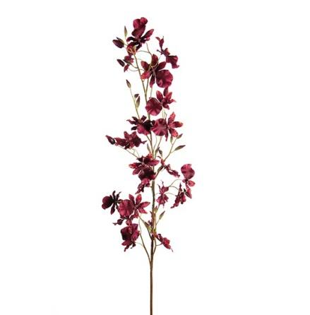 Oncidium höjd 80 cm