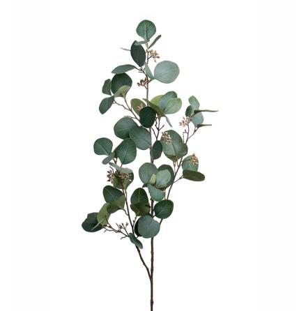Eucalyptus med bär höjd 100 cm