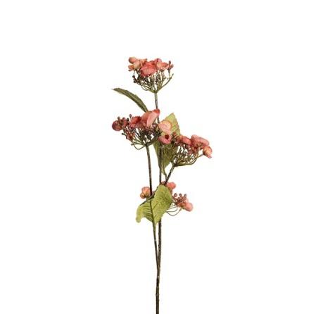 Hortensia höjd 60 cm