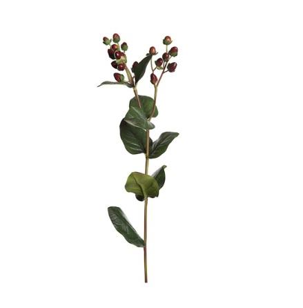 Hypericum höjd 55 cm